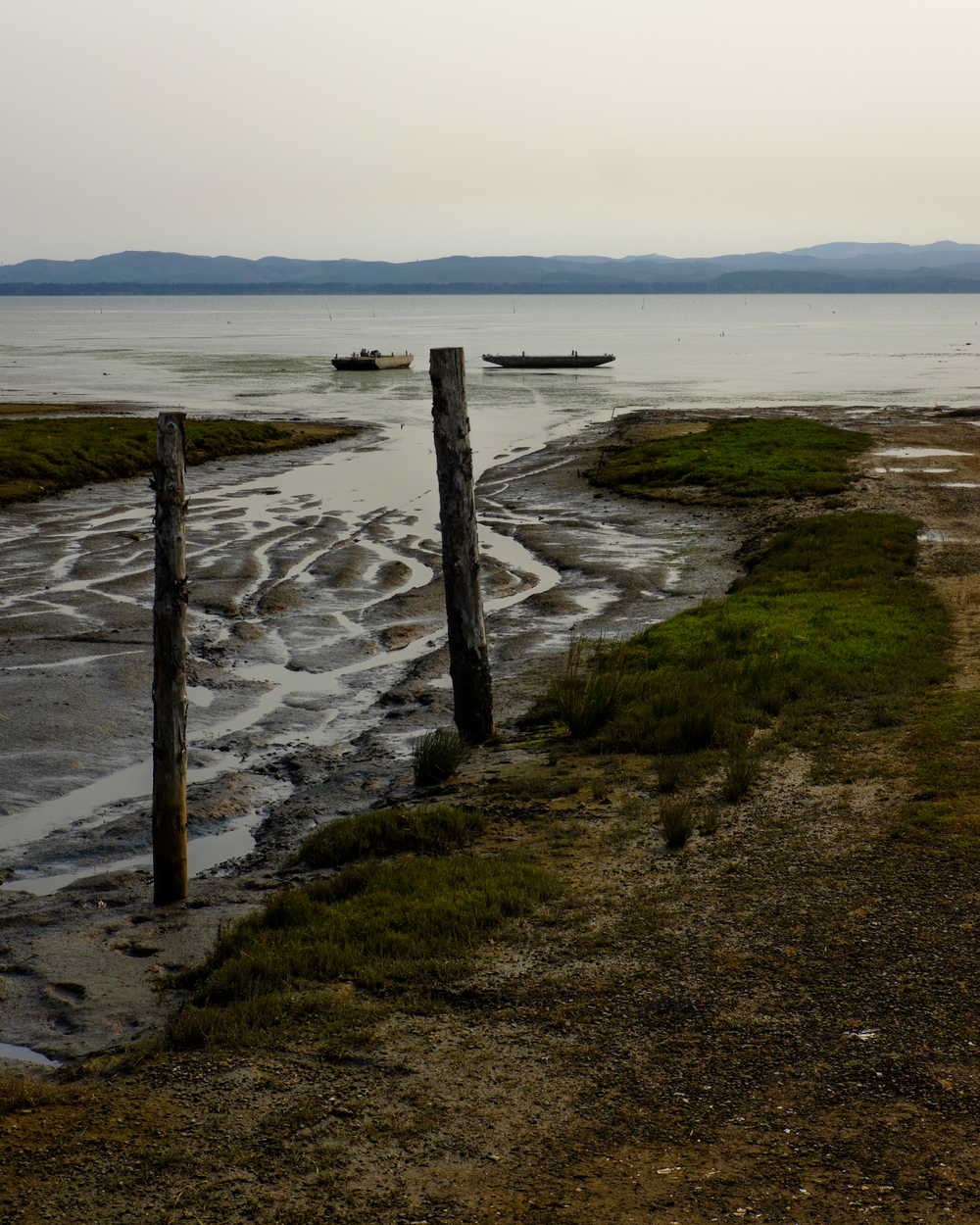 Tide flats, Willapa Bay