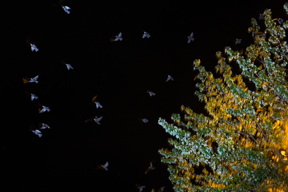 Flocks of birds fill the trees of a Medford shopping center