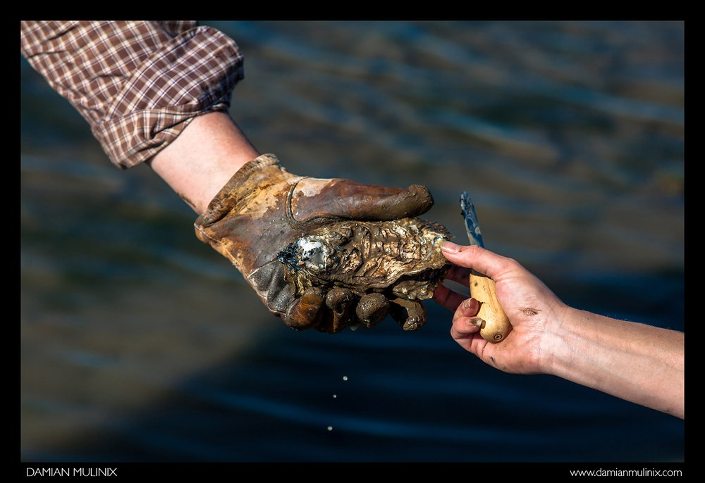 Oysters and Harvest-8.jpg