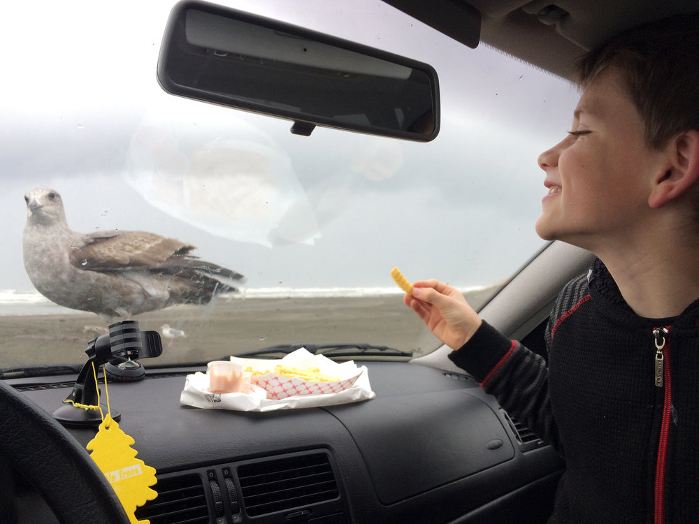 Wyse learned the joys of feeding seagulls from the car.