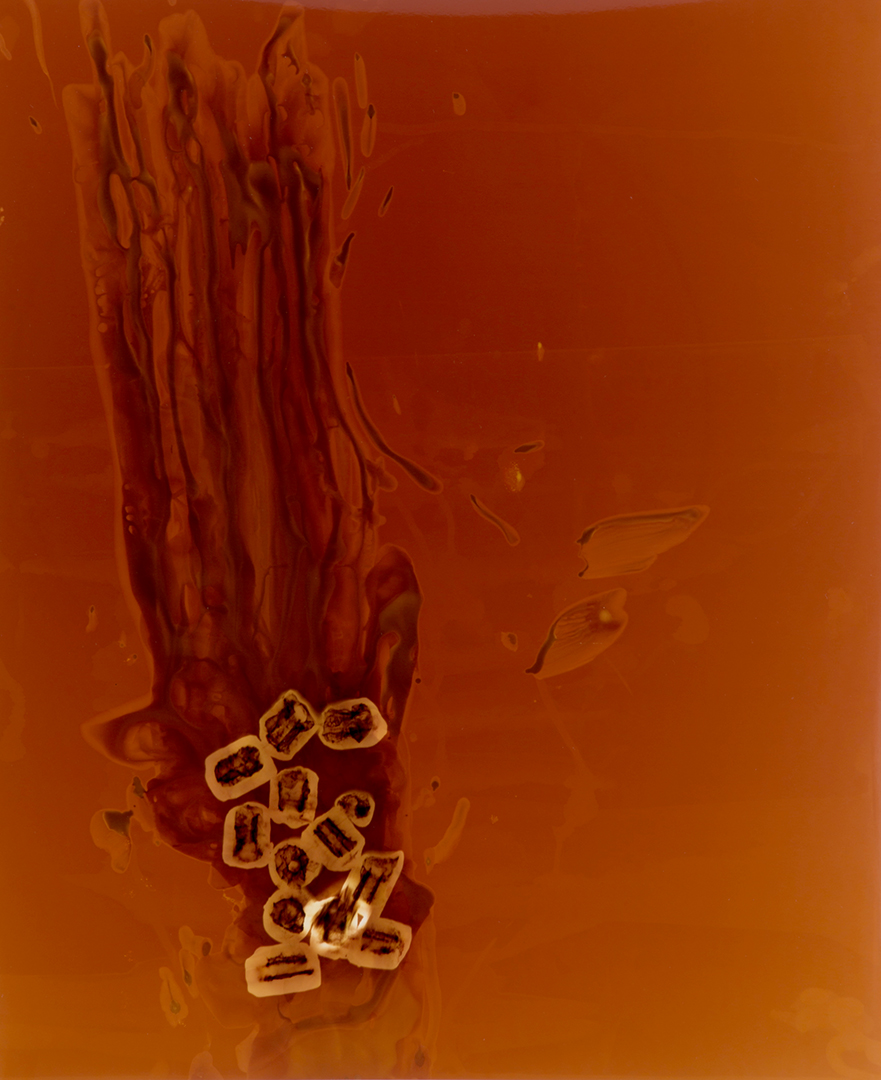 © Farrah Karapetian,   Push 5,   2015, unique chromogenic photogram, 24 x 20 inches.