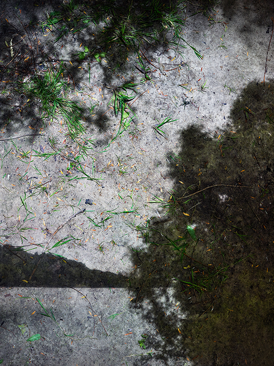 © Abelardo Morell. Tent Camera   Image On Ground. View Of The Seine River  , Giverny, France, 2015.
