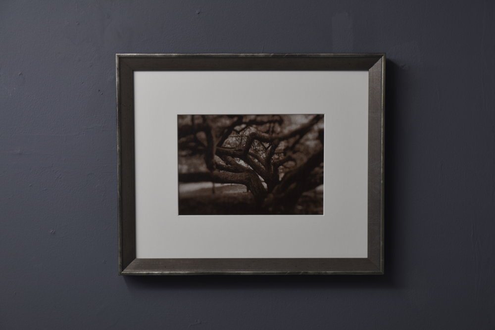 Melitte Buchman,  Parisian Tree , gold-toned salt print