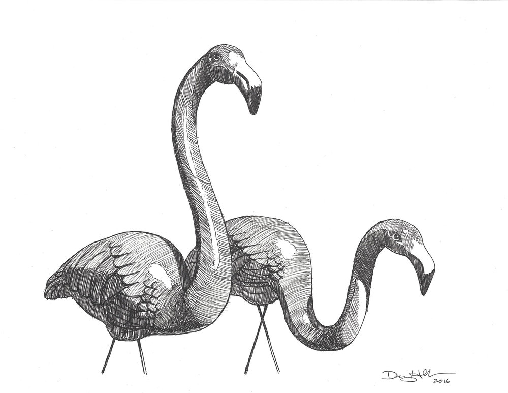 Flamingo Drawing 1