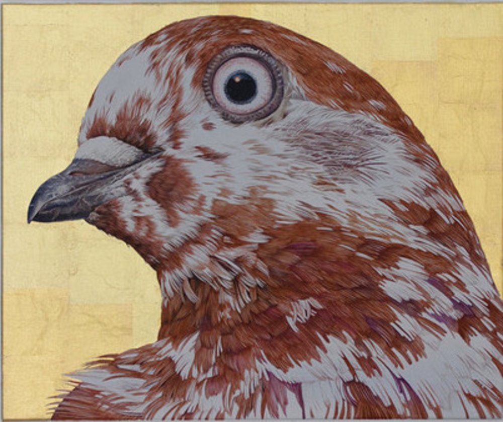 Clara Arts_Adele Renault_Tyson_s Corner Bronze Mottle Tippler Pigeon_2017-2018 _oil on linen and gold leaf_$3,000 USD.jpeg
