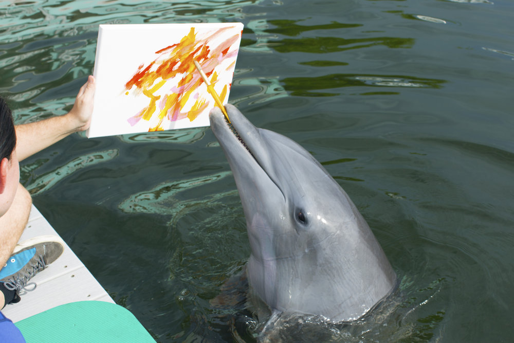 These dolphins learned to paint, and their work will go to a good cause - - Mashable