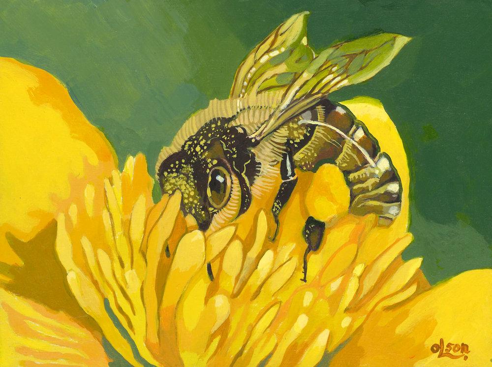 Christopher Olson-Bee Pollen-Acrylic-6x8in-2019-$350.00.jpg