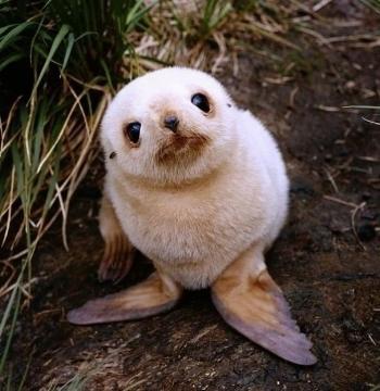 https://www.boredpanda.com/cute-baby-animals/