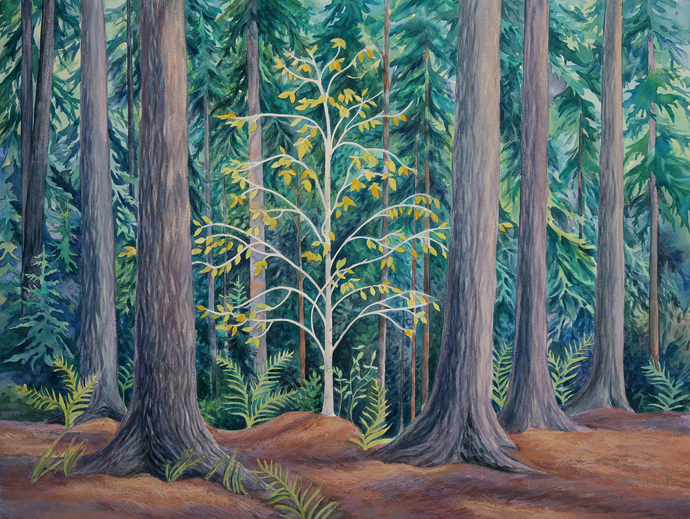"""Young Birch Amidst Old Pines"""
