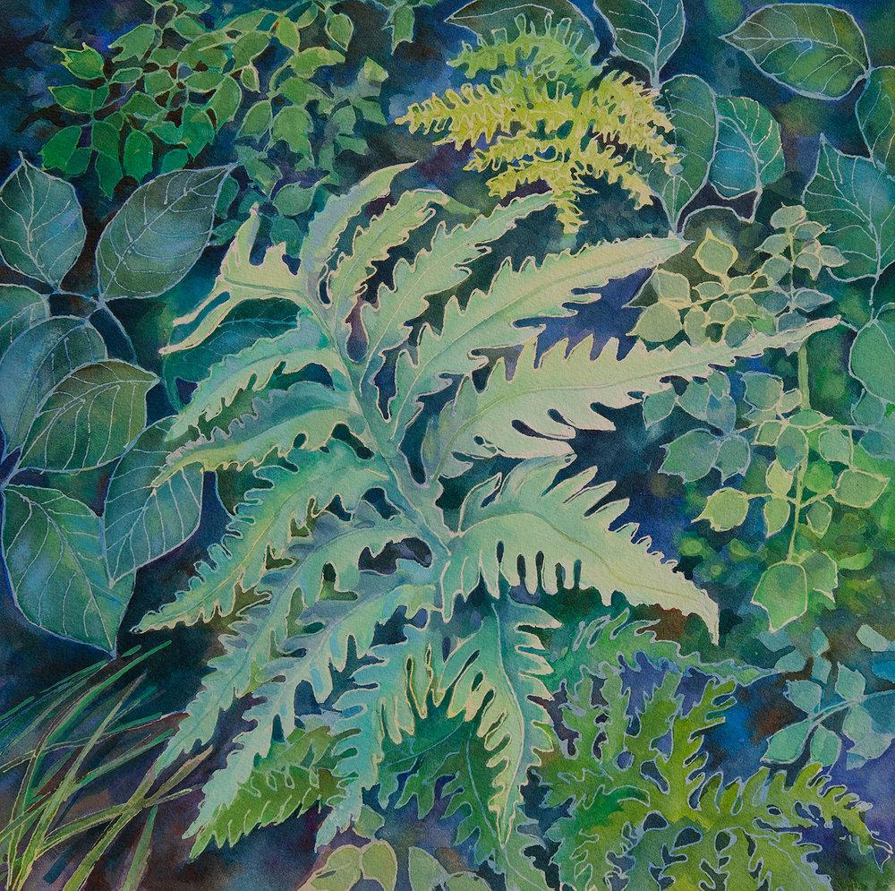 """""""Ampersand Ferns"""""""