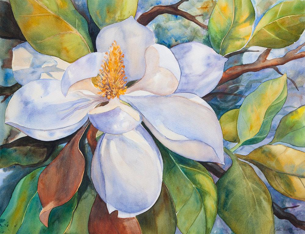 """""""Florida Magnolia"""""""