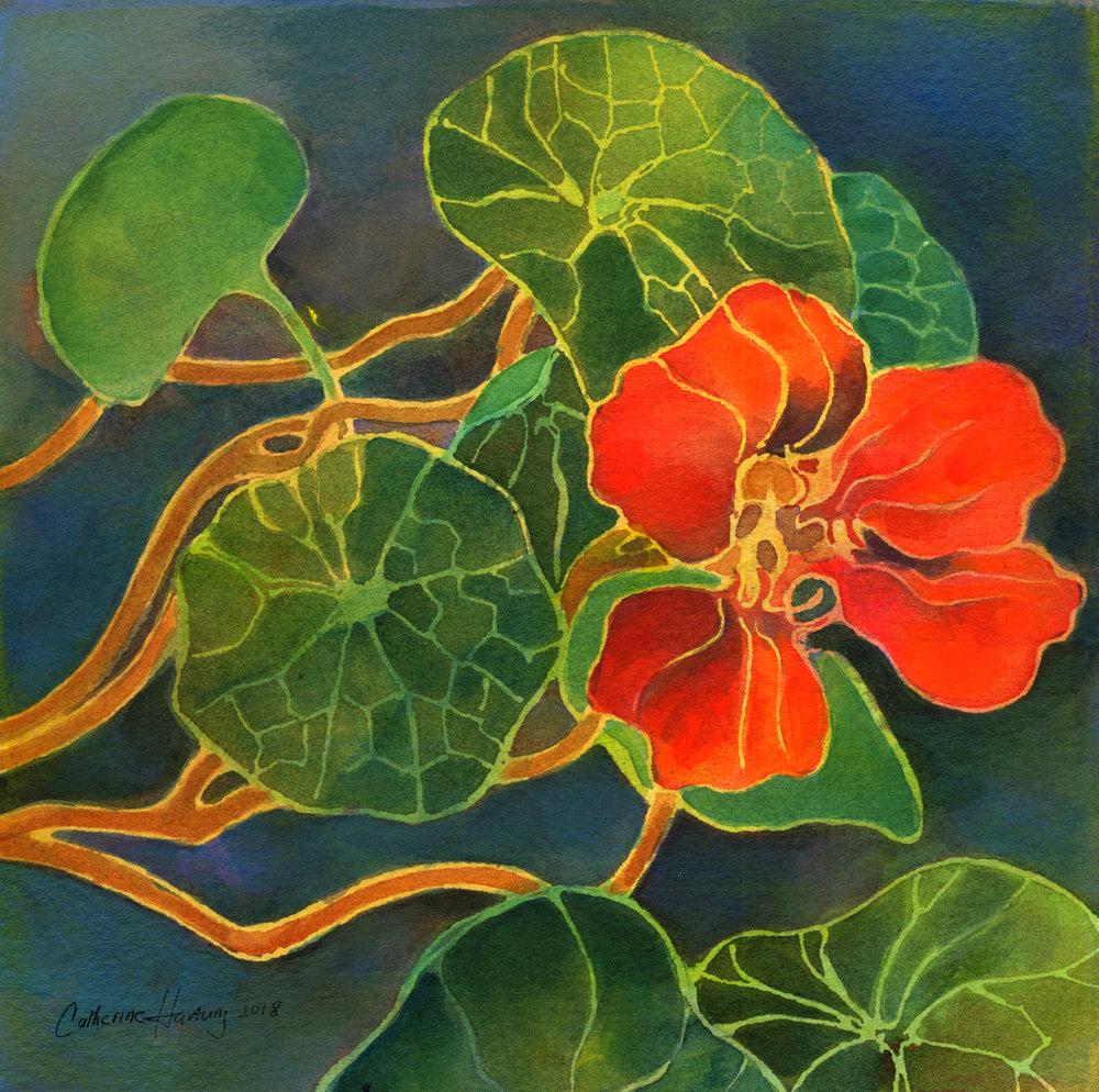 """Nasturtium Flower"""