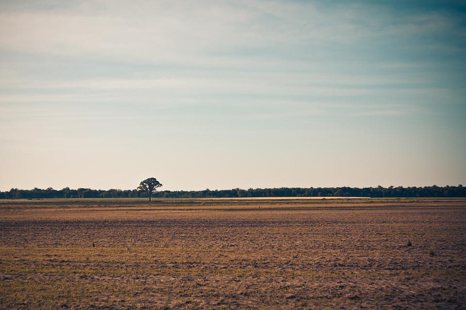ArkansasLandscape-1.jpg