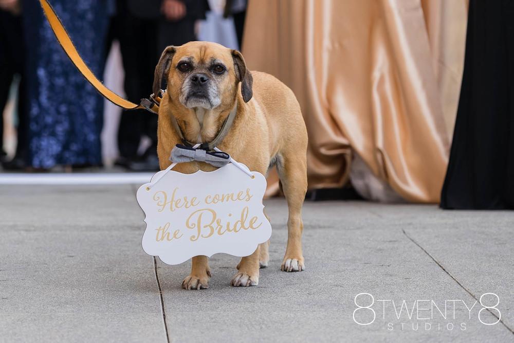160520-andrea-vincent-wedding-©8twenty8-Studios-0030.jpg
