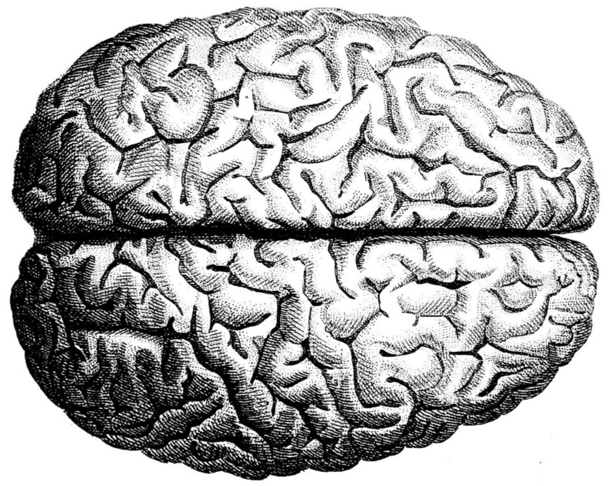 Brain+Greyscale