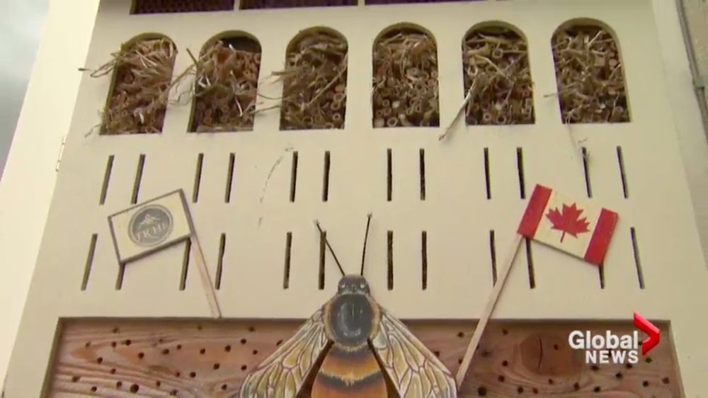 "Canadian High Commissions Rooftop""Bee Hotel"""