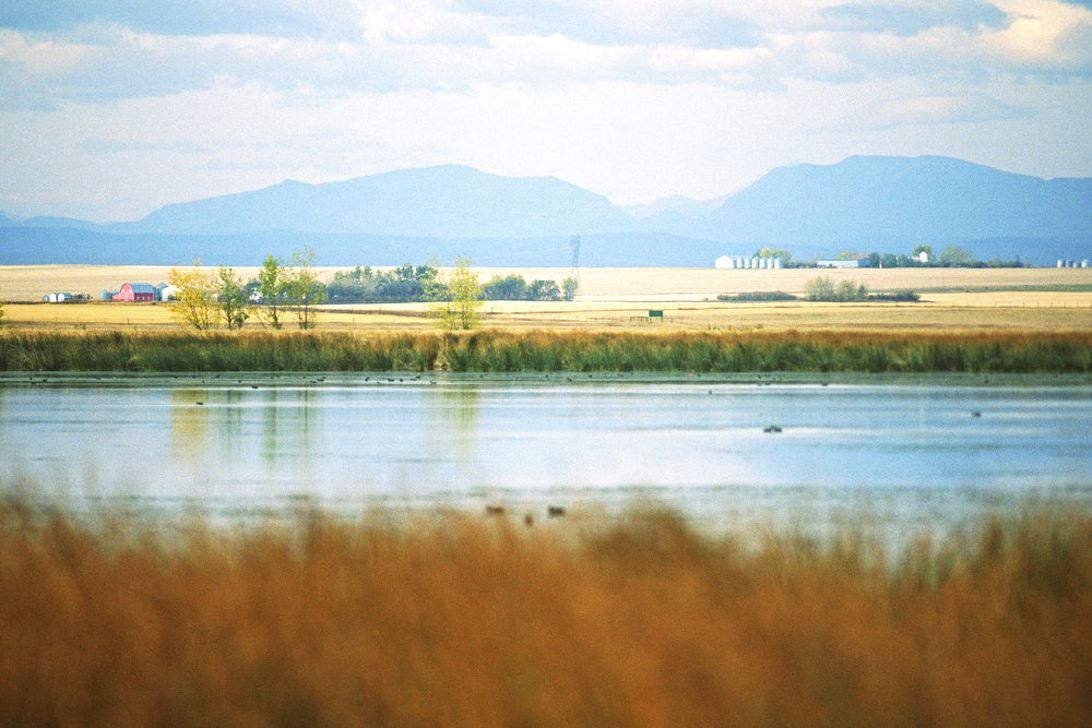 Alberta is a beautiful province. It should be protected (Photo of a conservation site at Frank Lake, provided by Ducks Canada).