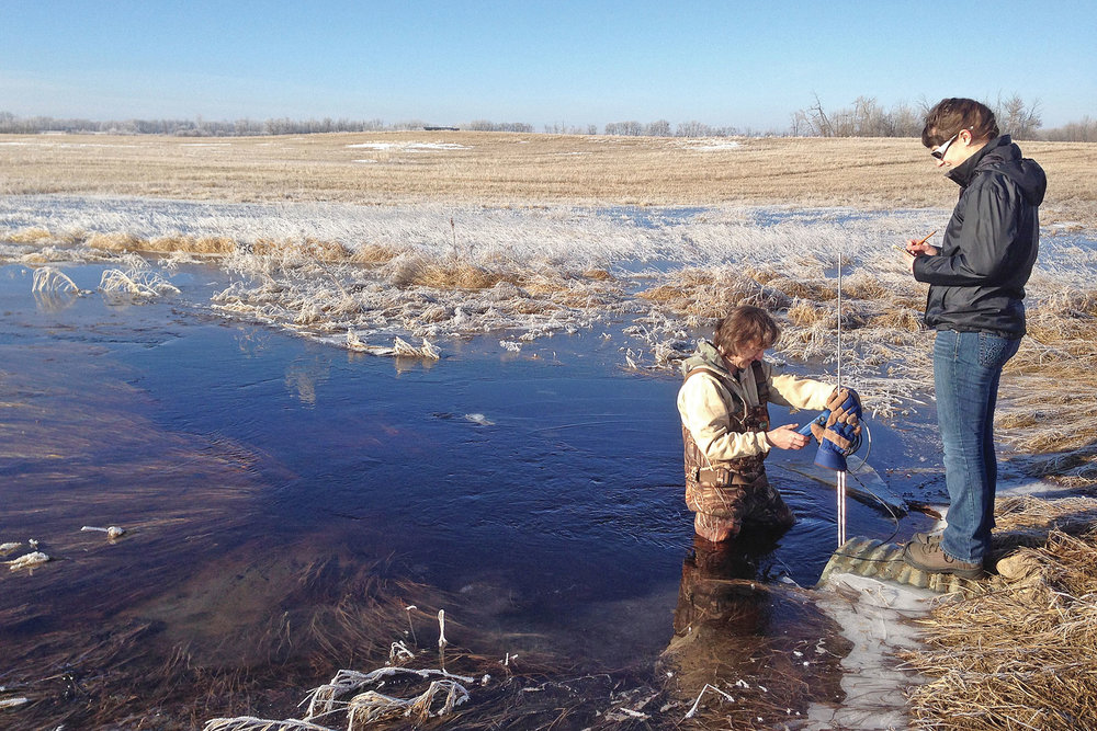 While all of the photos in this series feature summer settings, conservation is something that happens all year round in Alberta. Conservationists continue to work even in the winter time. Here, a conservationist plunges into freezing water to test the health of the ecosystem [Photo provided by Ducks Canada].
