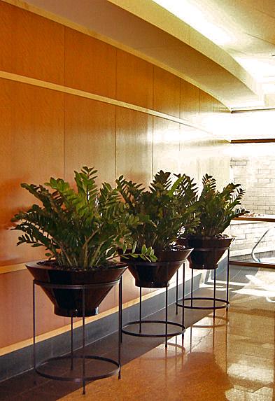 plants 076  cropped.jpg