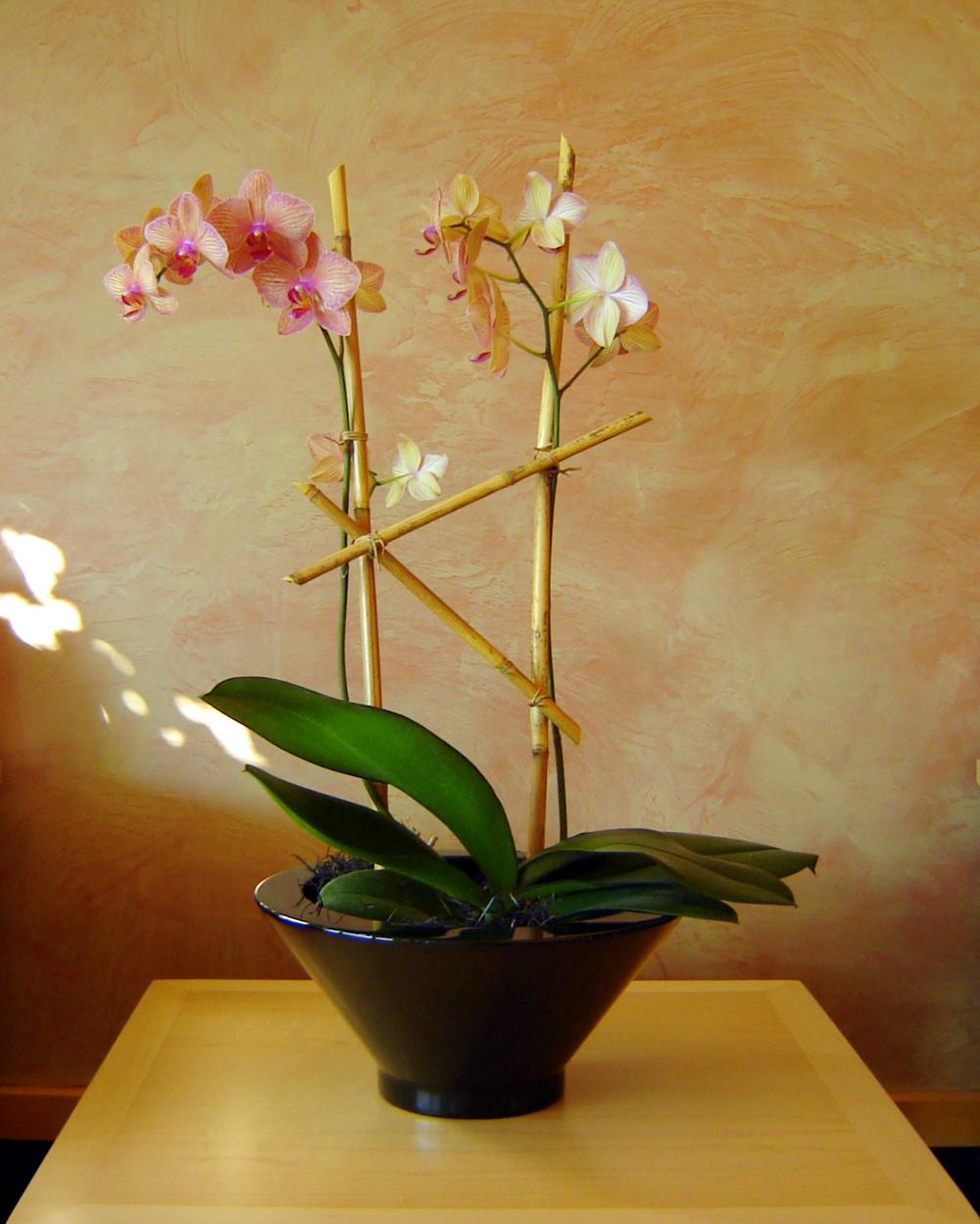 plants 045.jpg