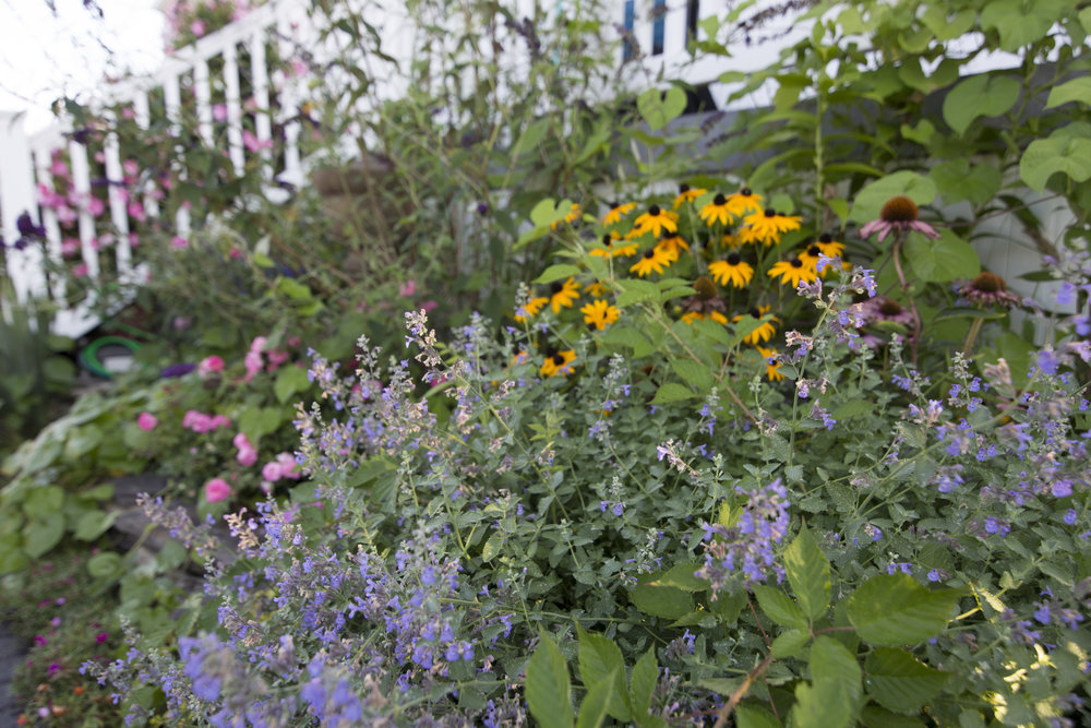 Charlotte perennial garden design