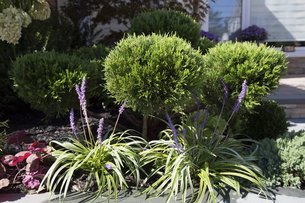 shade garden charlotte