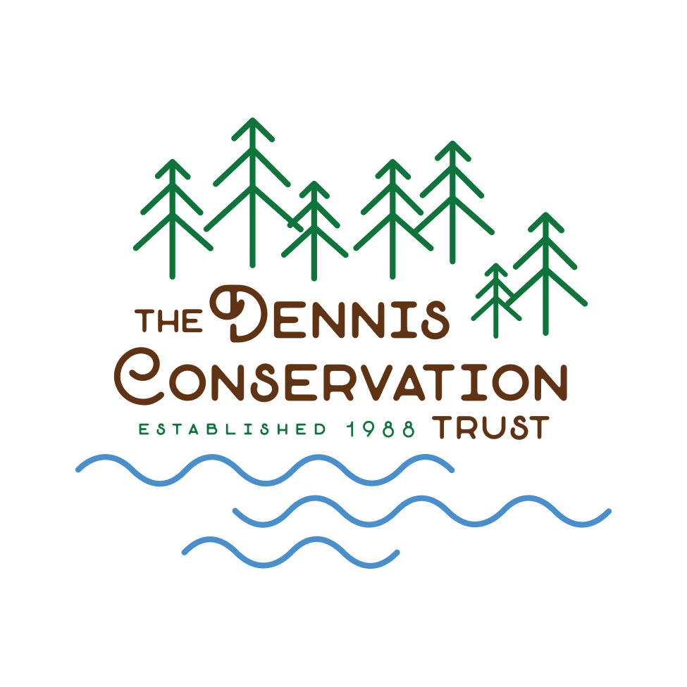 DCT_logo3.jpg