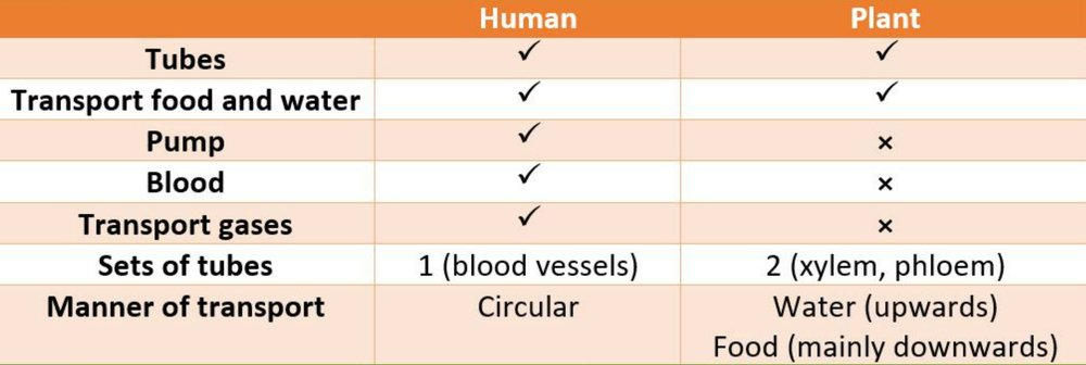 Plant system in comparison with the Human Circulatory systems