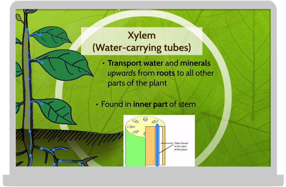 plant science 2 .png