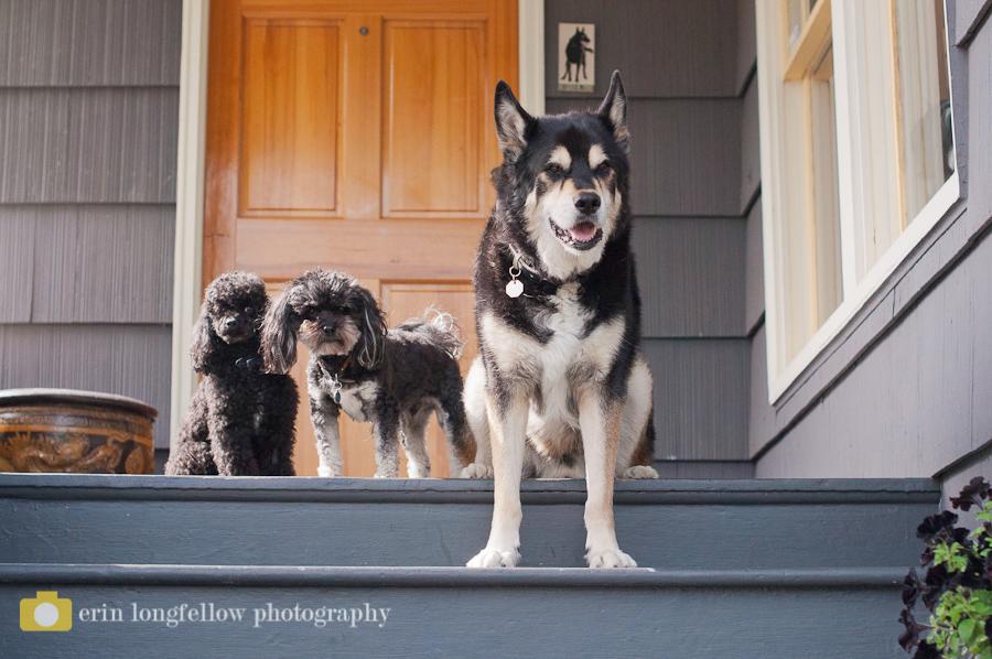 Seattle Dog Photography 6.jpg