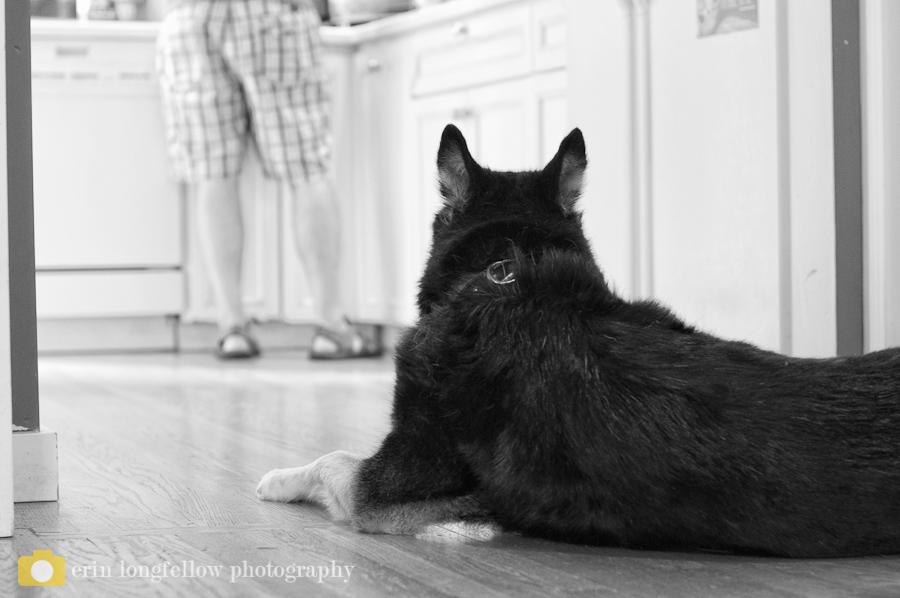 Seattle Dog Photography 7.jpg