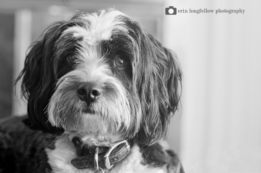 Seattle Dog Photography 9.jpg
