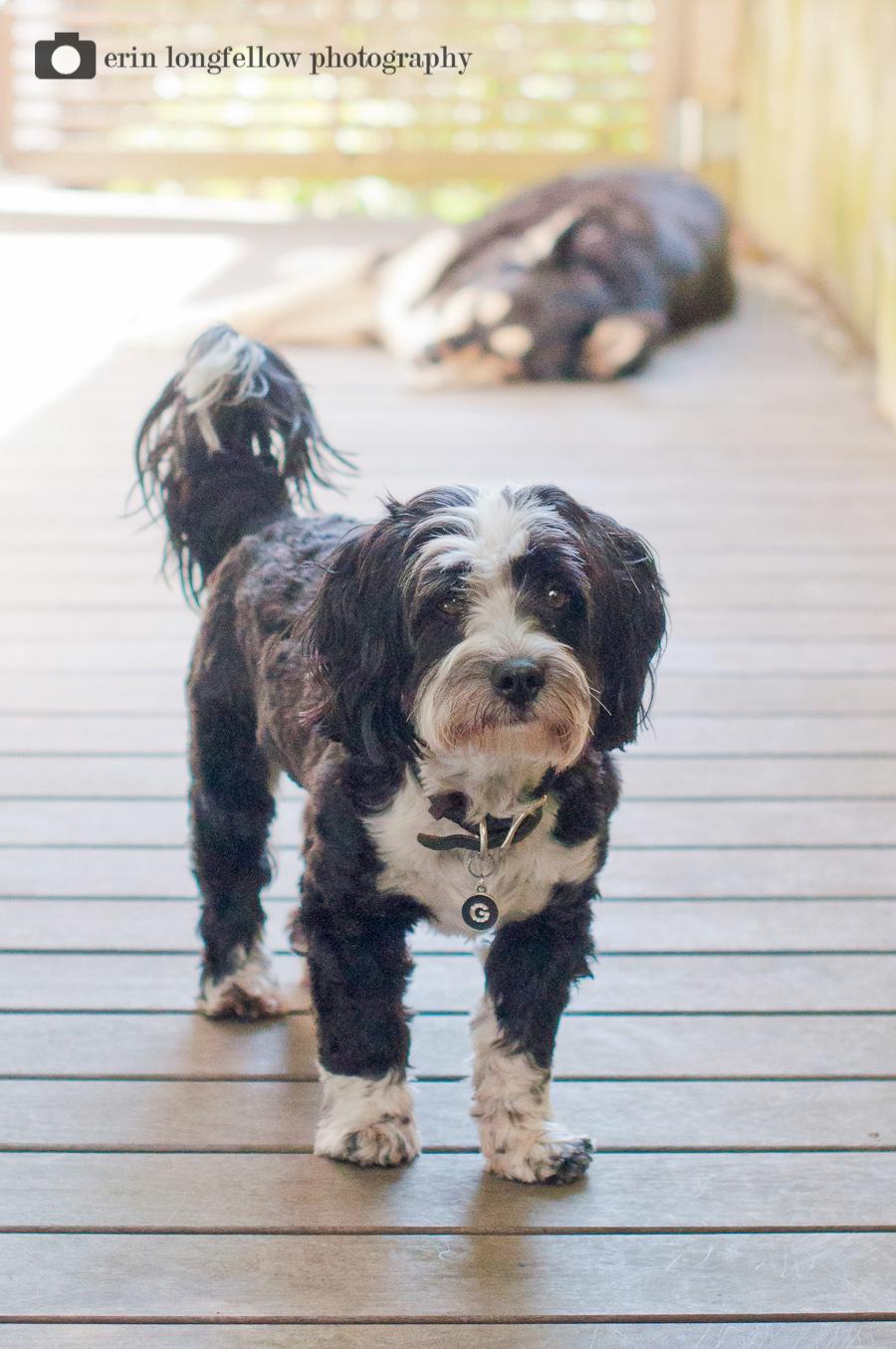 Seattle Dog Photography 14.jpg