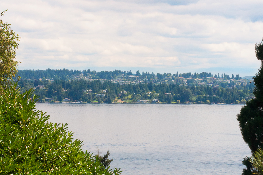 Seattle Dog Photography 22.jpg