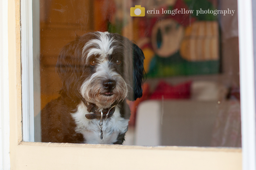 Seattle Dog Photography-1.jpg