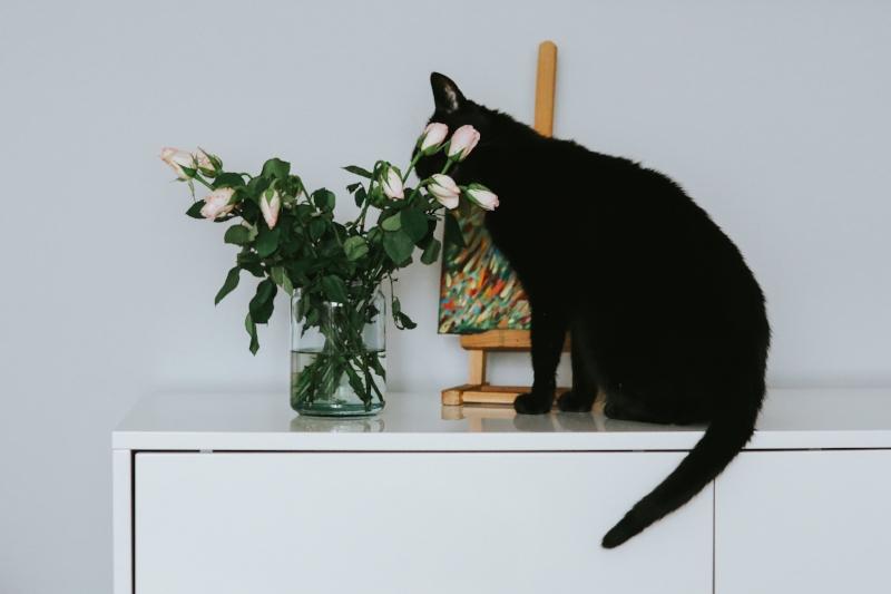 cat-flowers.jpg