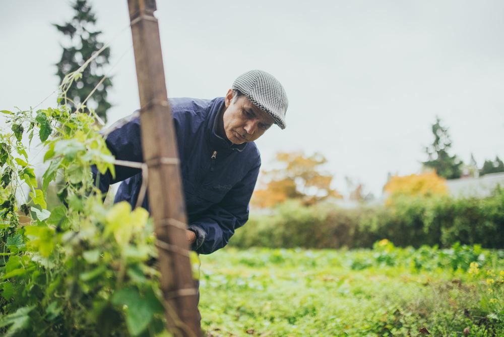 Refugee Gardening Program