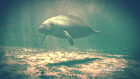 Manatees: Conserving a Marine Mammal - 0;00;05;00Modeling, Texturing, Rigging, Animating, Lighting, Rendering, CompositingMaya, Photoshop, Headus, After EffectsRendered beauty, shadow and AO layers of manatee; created particle effects for water floaties; composited over live footage; worked with producer and scientist to assure correct anatomy and movement; used numerous reference images