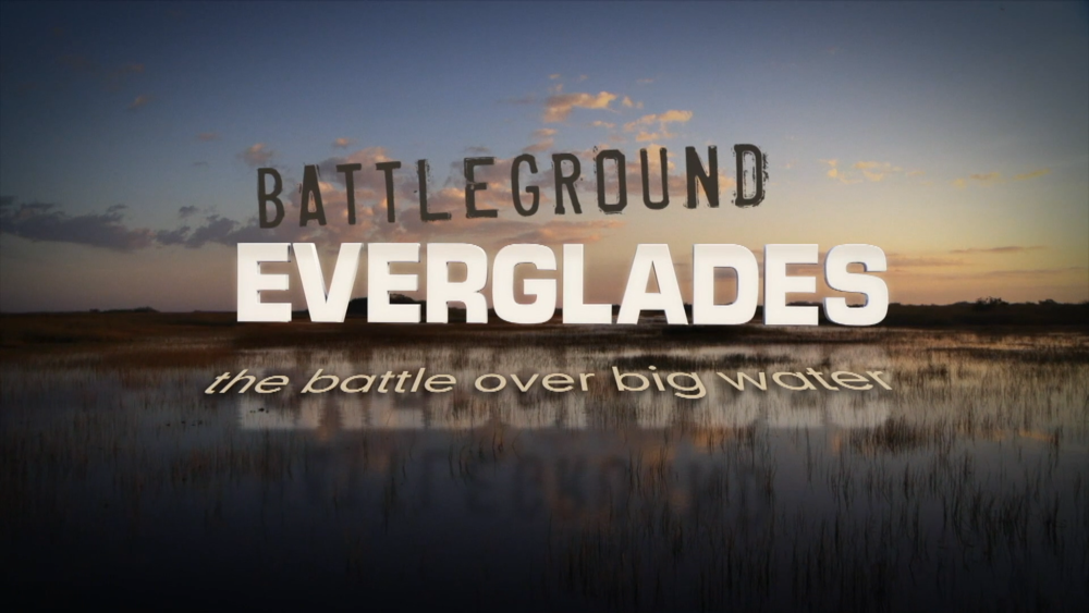 Motion Graphics-Battleground Everglades.png