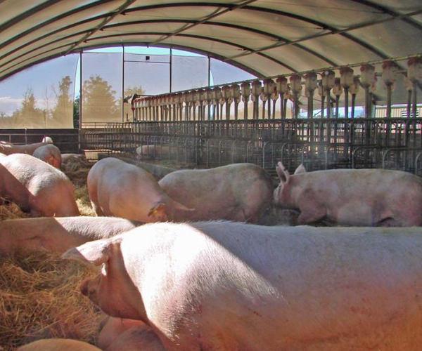 pork-campo-verde-bv-trading