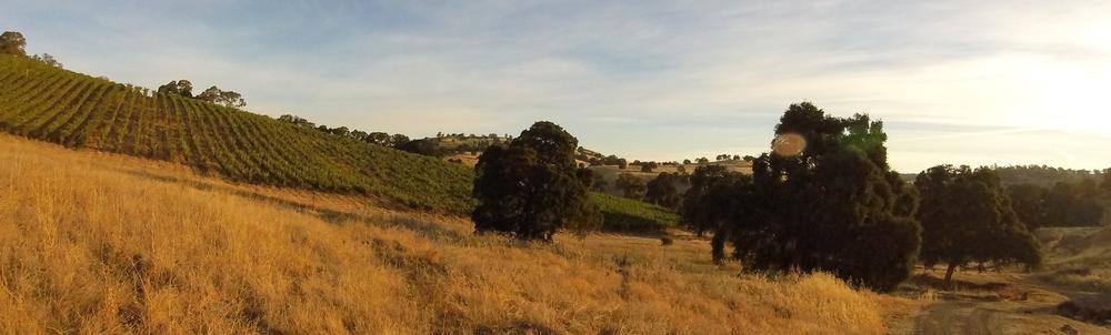 Gold Creek Vineyards. Photo by Jeffrey Maltzman