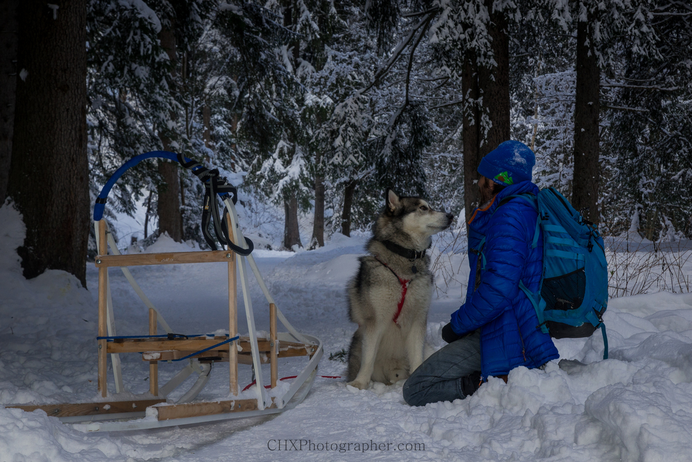 Sledding with my Alaskan malamute in Chamonix, France