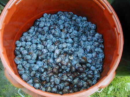 Keysi's plums :-)