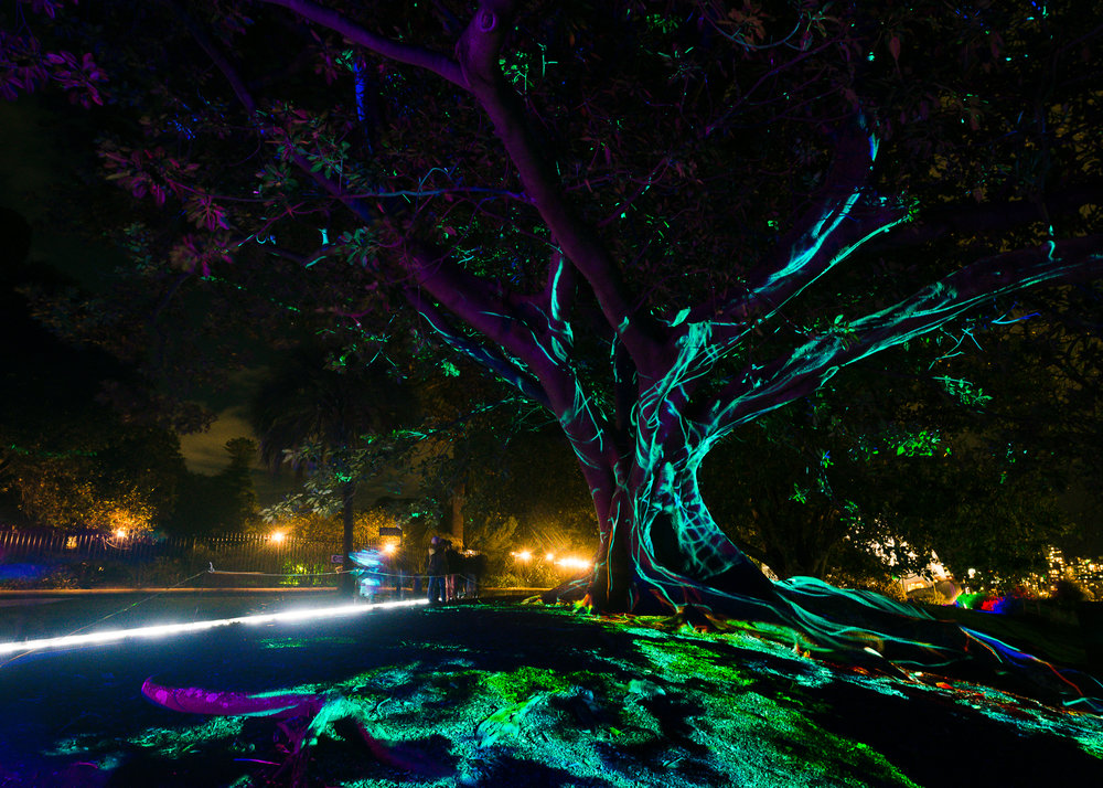 -The Royal Botanical Gardens, Vivid Sydney-  Michelle Lake ©
