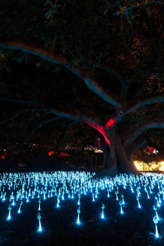 -The Royal Botanical Gardens, Vivid Sydney-  Michelle Lake ©