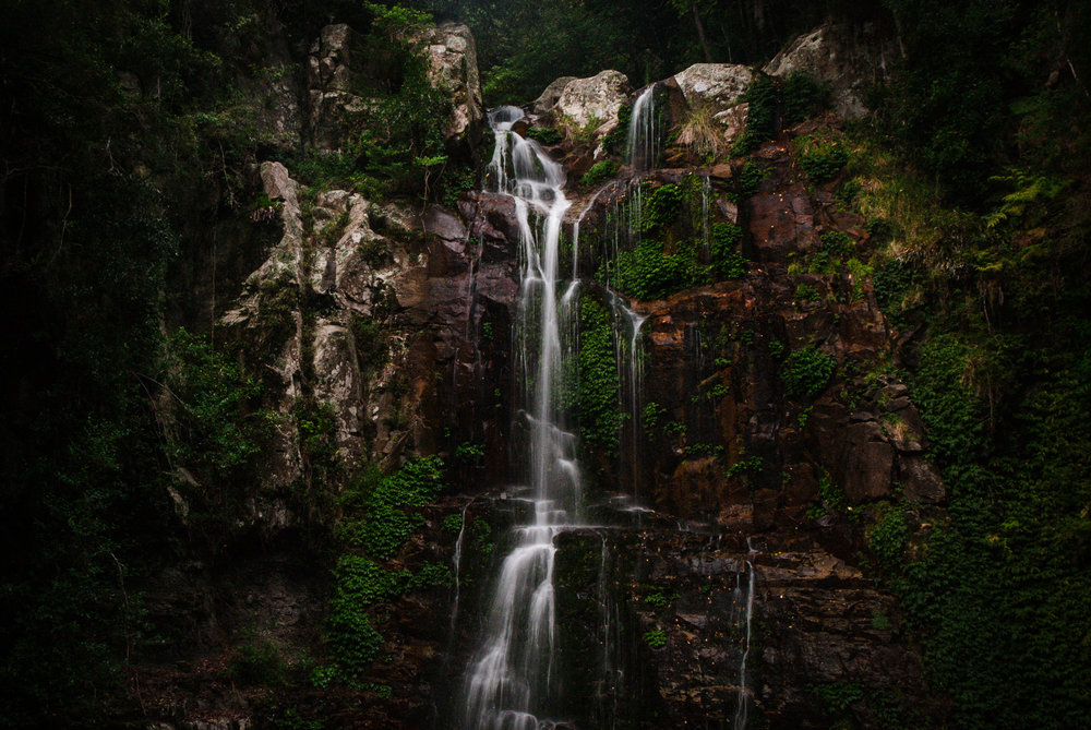 - Minnamurra Falls -  Michelle Lake ©