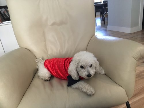 Dog Sweater on Coco
