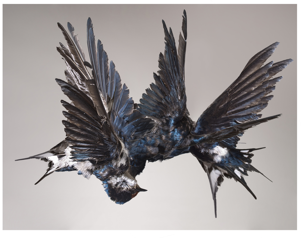 Steven Bosch.Migrate. 2016. Photographic collage on 100% cotton paper, 57 x 74 cm