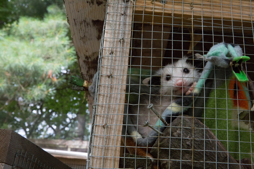 wildlife rehab05.jpg
