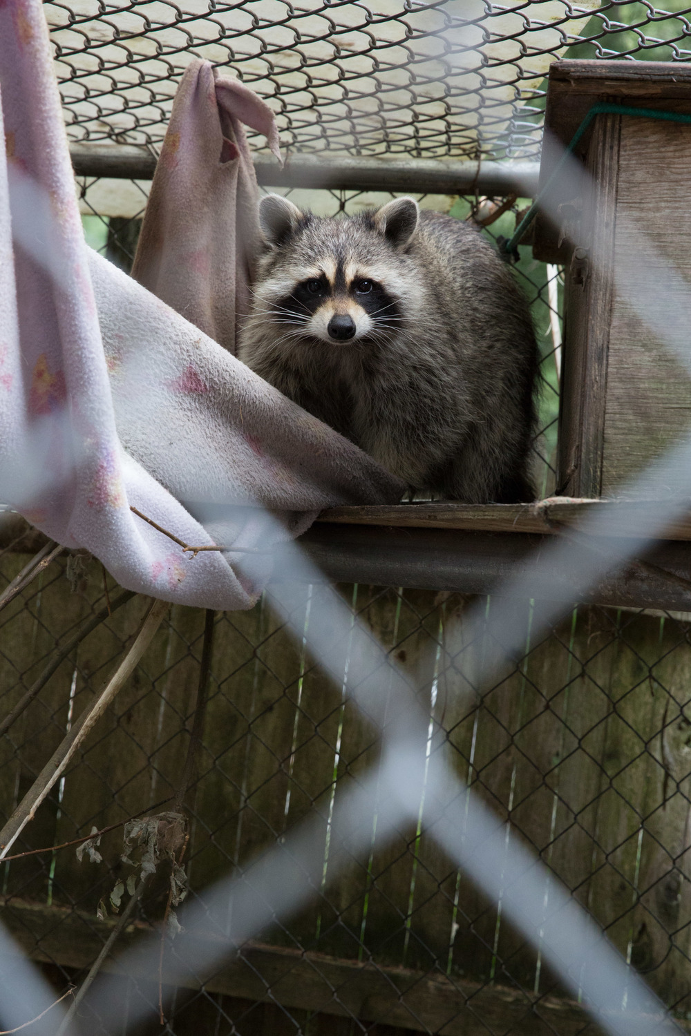 wildlife rehab08.jpg
